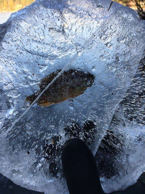 Frozen fish surprise at durrance lake ocean 98 5 for Best way to freeze fish